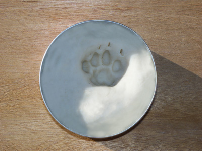 Pet-Paws Impression Process